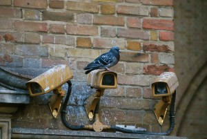 Camera spy pigeon source Pixabay CC0